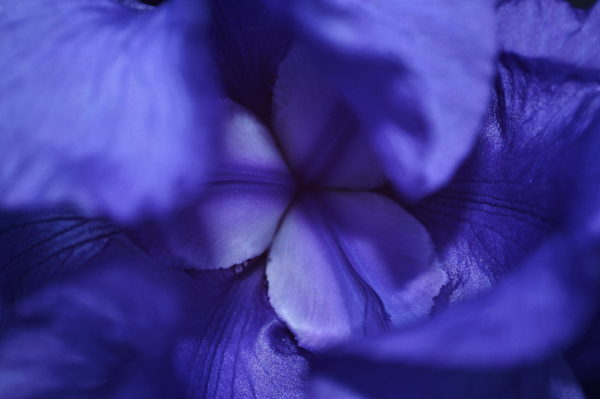 Living Garden: A Poem